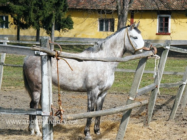 Horse riding in Sarvar, Hungary